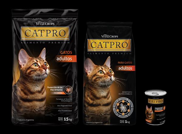 Cat pro Alimento para gatos