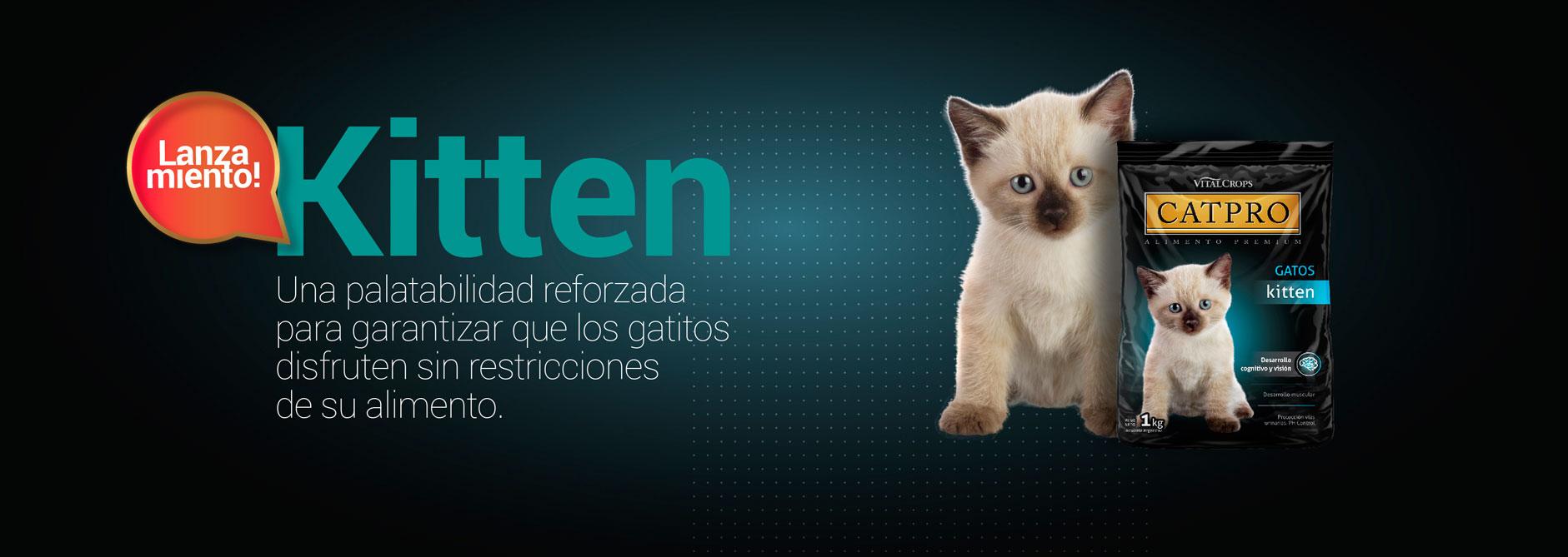 Catpro Kitten
